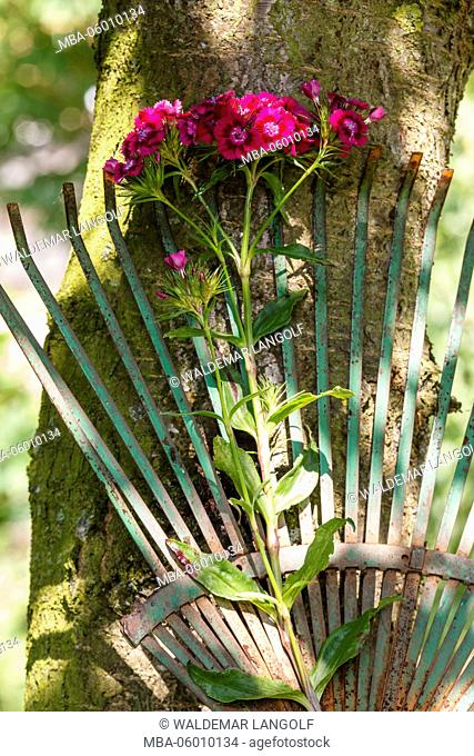 Sweet William at a rake with wooden heart