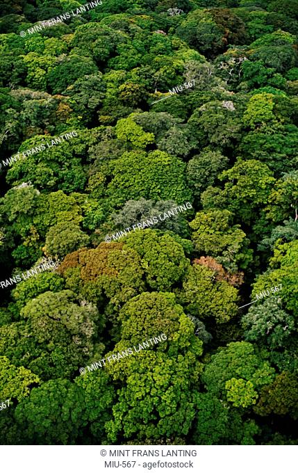 Rainforest canopy aerial view, Congo, DRC, Democratic Republic of the Congo