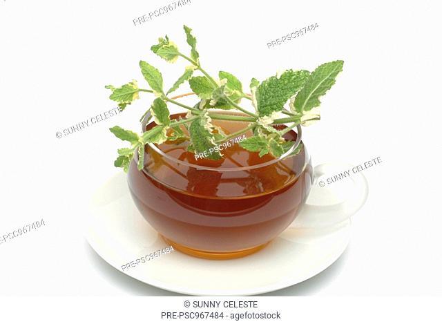 Pineapple mint, Mentha Suaveolens, herbtea, herb-tea, medicinal tea, tÞ, infuso, tisana