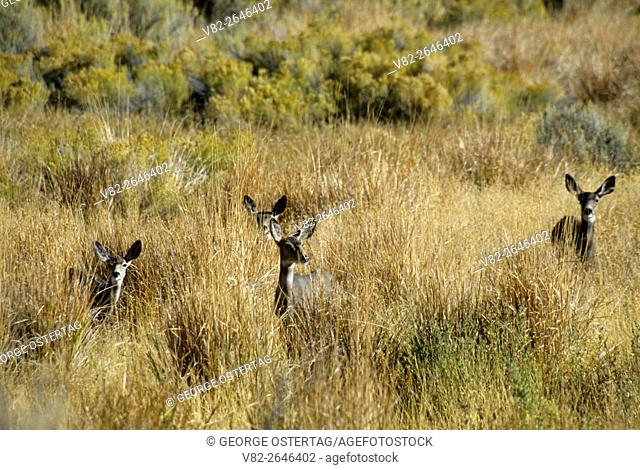Malheur national wildlife refuge oregon Stock Photos and