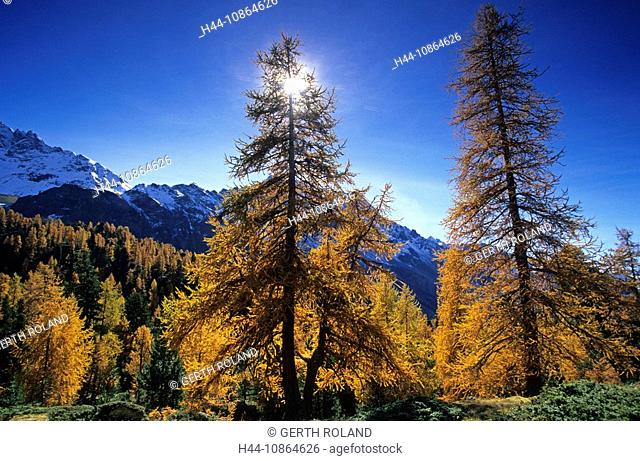 Val da Camp, Switzerland, Canton of Grisons, Graubünden, Posciavo, larches, autumn, autumn, back light, sun, mountains, Landscape, scenery, nature, mountains
