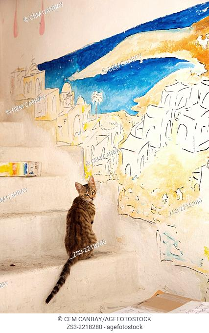 Cat in front of a painted wall at the town center Chora, Ios, Cyclades Islands, Greek Islands, Greece, Europe