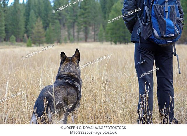 Dog and person looking in field, Lake Tahoe, California, USA