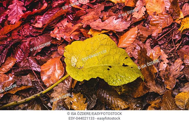 Soft view of autumn dry leaves ground surface. Autumnal park, fall nature
