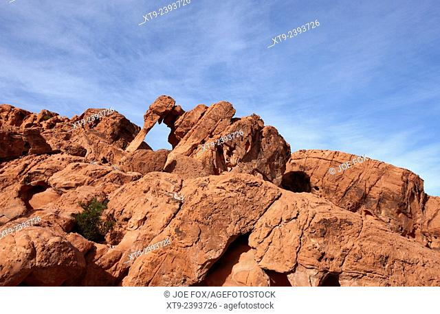 elephant rock sandstone rock formation valley of fire state park nevada usa