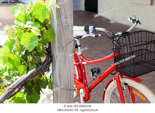 New Zealand, North Island, Martinborough, bicycle and grape vines