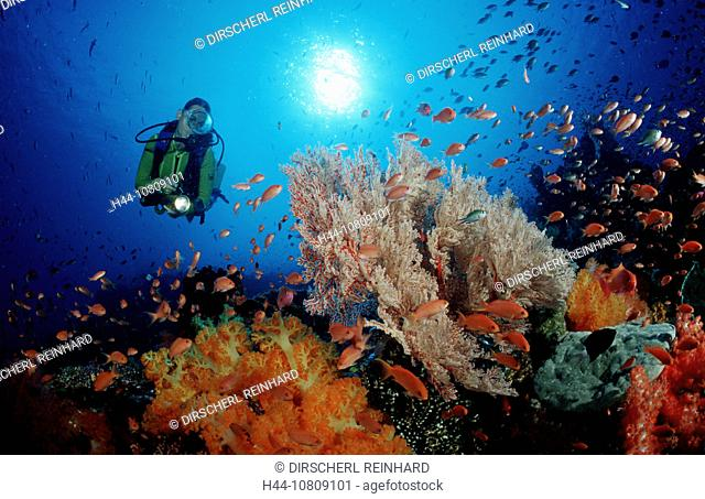 action, blue, coral, coral reef, diving, holiday, holidays, Indian Ocean, Indonesia, Komodo, national park, live, ma