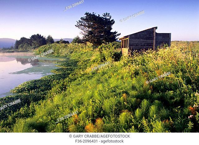Sunrise light on the Arcata Marsh, Arcata, Humboldt County, CALIFORNIA