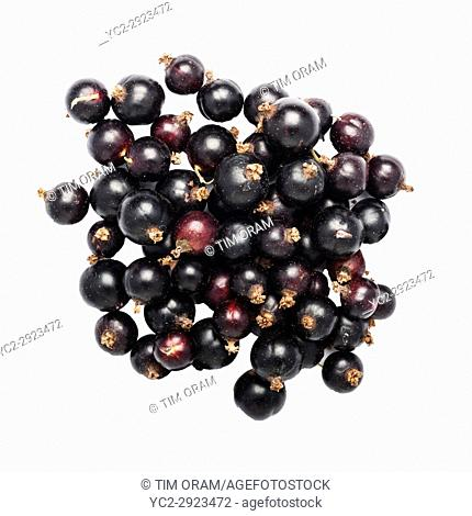 Black Currants on a white background