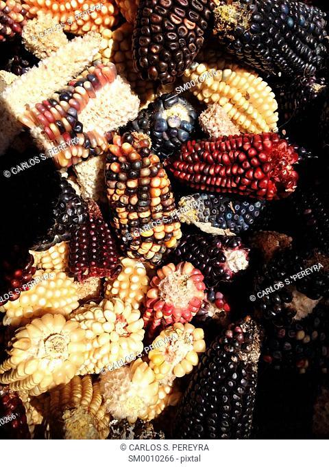corn in Mexico