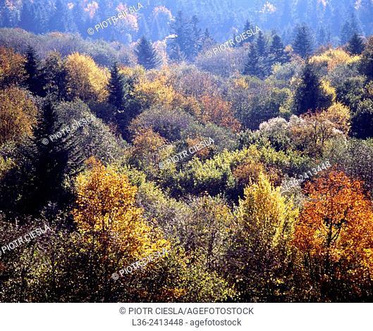 Bieszczady National Park. Bieszczady mountains. Bieszczady forest in autumn. Poland