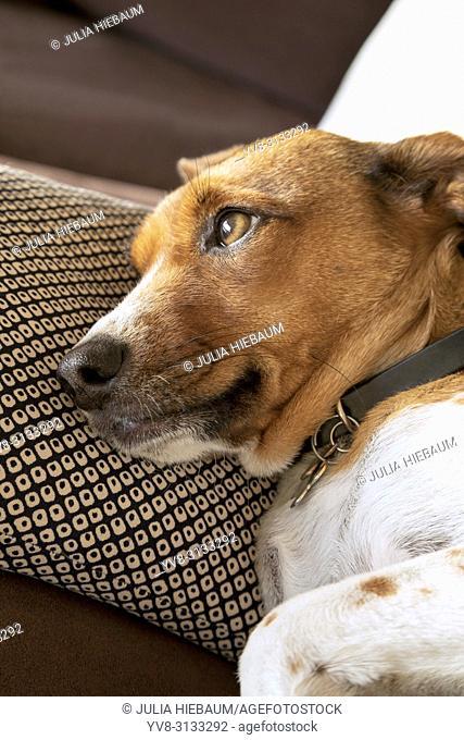 Dreamy mix terrier female dog