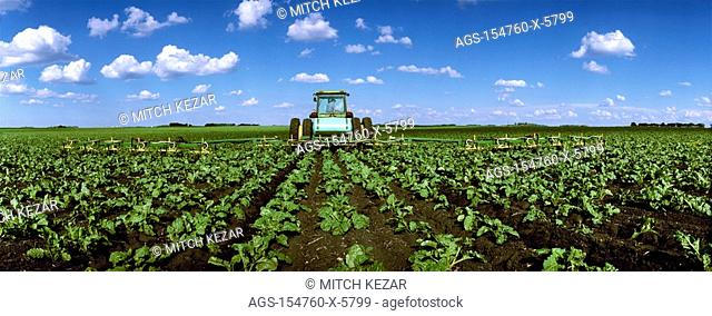 Agriculture - Herbicide application to an early growth sugar beet field / MN - Hector