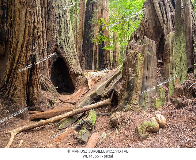 Muir Woods National Monument is an old-growth coastal redwood forest