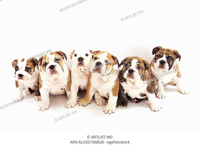 Six sitting dogs