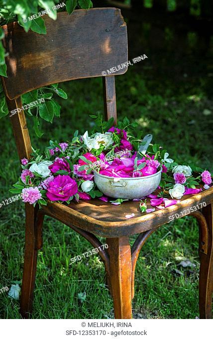 Rose petals gathered for jam