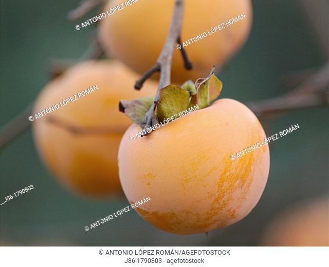 orange friut, persimmons, Diospyros kaki