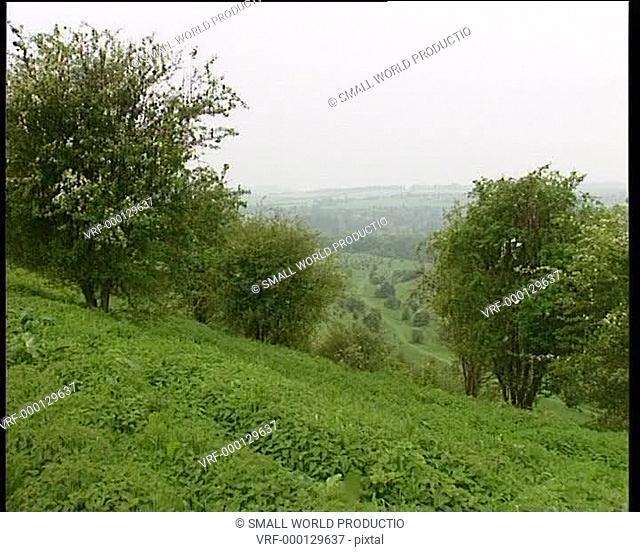 Trees in field, road in distance, Twyford Down