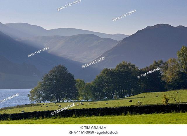 Sheep grazing by Lake Ullswater, Lake District, England, United Kingdom