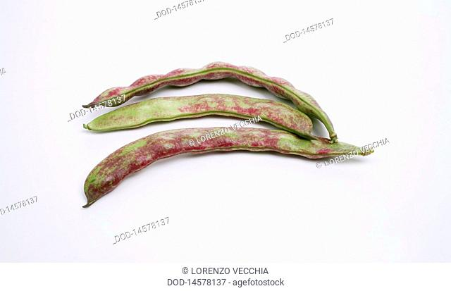 Haricots violets bean pods