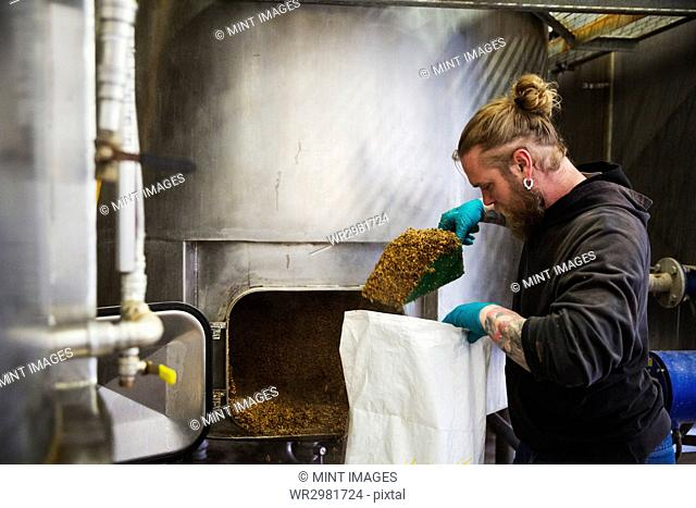 Man scraping shovelling spent grain from a large kettle into a bag in a brewery
