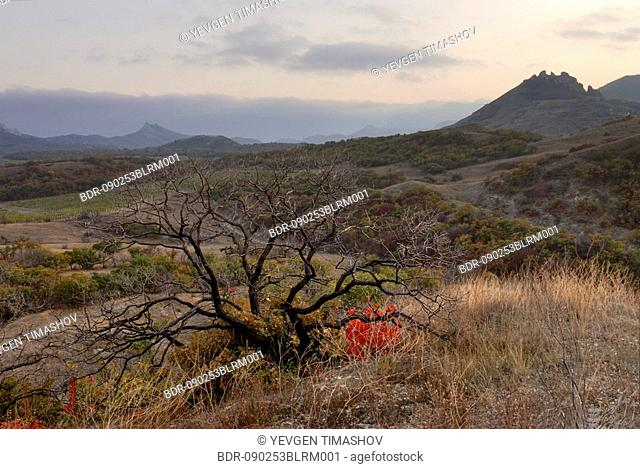 view at otlu-kaya mountain in koktebel area of crimea