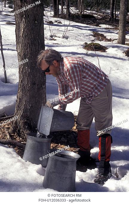 sugaring, Vermont, VT, Man collecting sap during sugaringtime from maple tree on Carpenter Farm in Cabot in the snow in the early spring