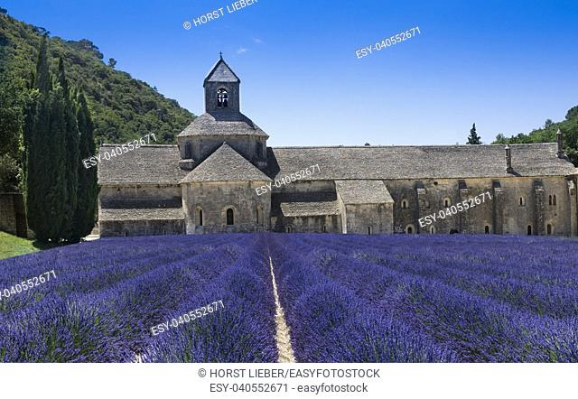 Lavender rows in front of the abbey of Sénanque. Gordes, Vaucluse, Provence-Alpes-Côte dâ. . Azur, France