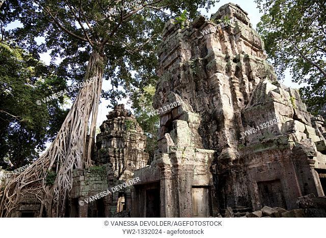 Ta Prohm, temple at Angkor in Cambodia. November 2010.  V10CAM0402RM