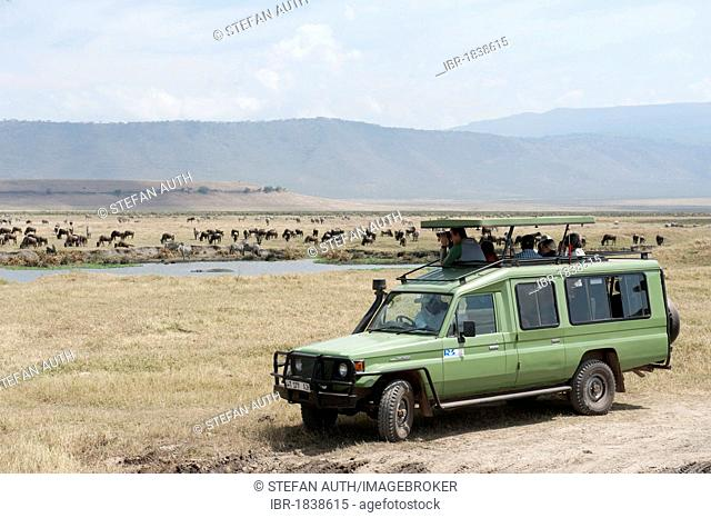 Safari, tourism, tourists observing herds of zebra from a Toyota Land Cruiser, Burchell's Zebra (Equus quagga) and Blue Wildebeest (Connochaetes taurinus) at a...