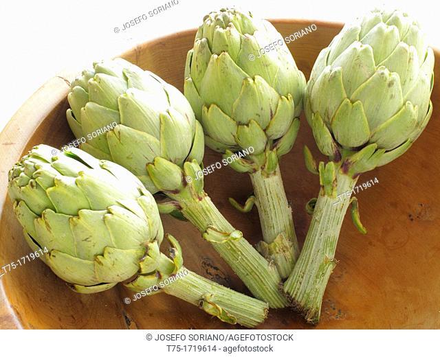 Artichokes Cynara scolymus