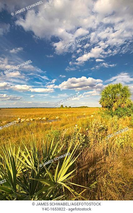 Sawgrass Cladium jamaicense prairie along Upper Wagonwheel Road in Big Cypress National Preserve, southern Florida