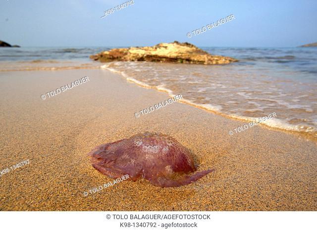 Cala del Pilar Menorca Spain Balearic Islands Biosphere Reserve