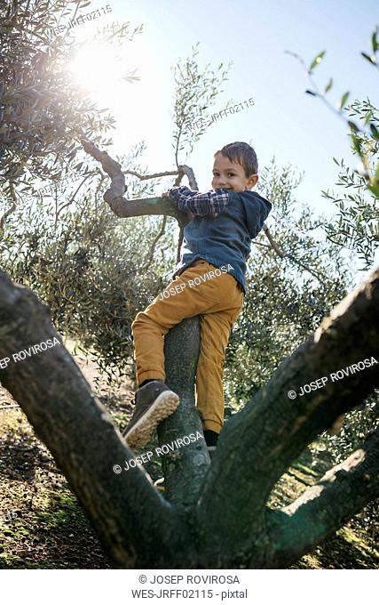 Happy boy playing in an olive tree