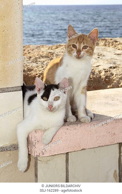 two young domestic cats - sitting on wall