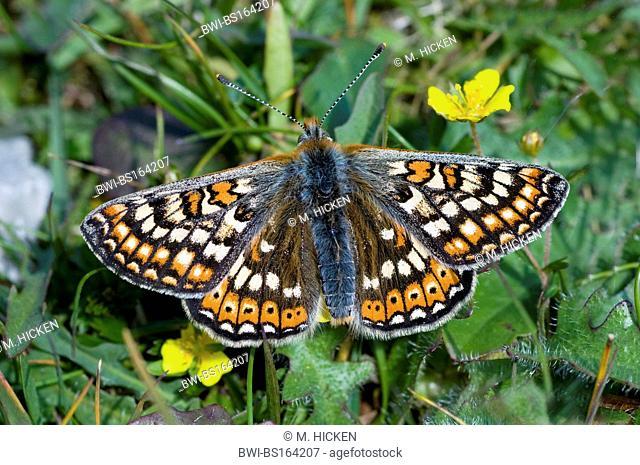 butterfly kingdom scotland