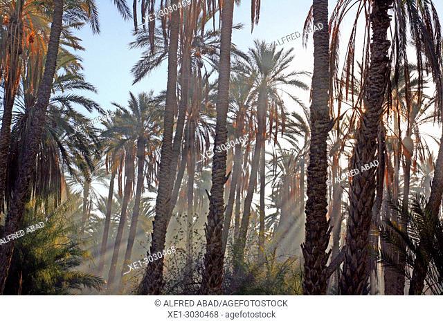 palm grove, Tozeur, Tunisia