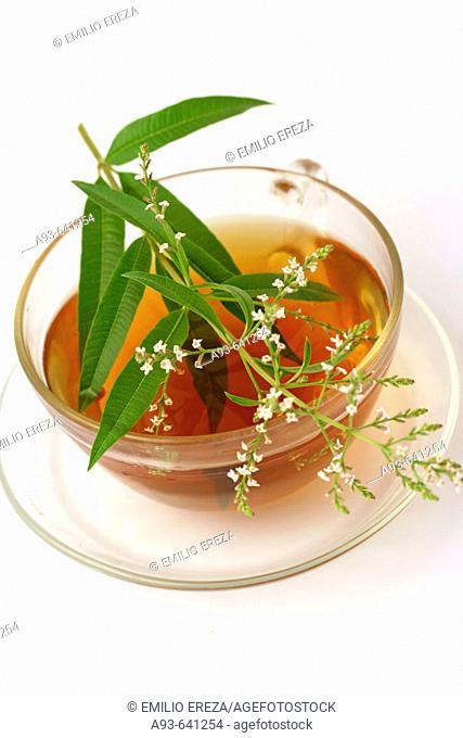 Lemon Verbena tea (Lippia citriodora o Aloysia triphylla)
