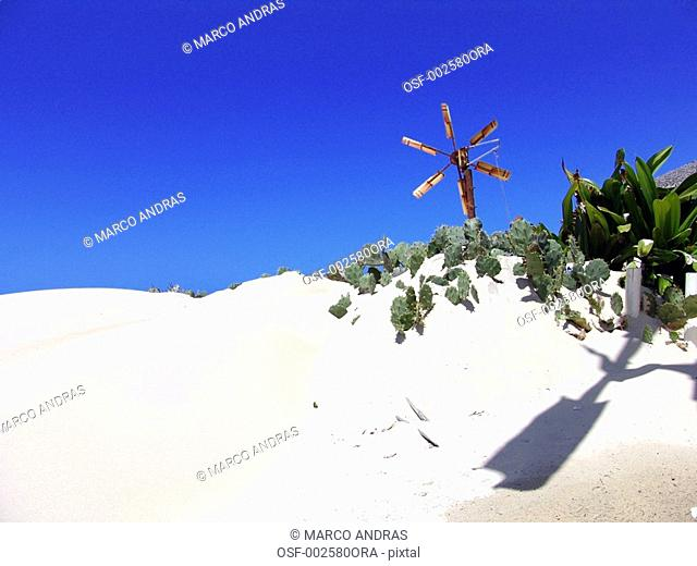 fortaleza white sand dunes with a green tree