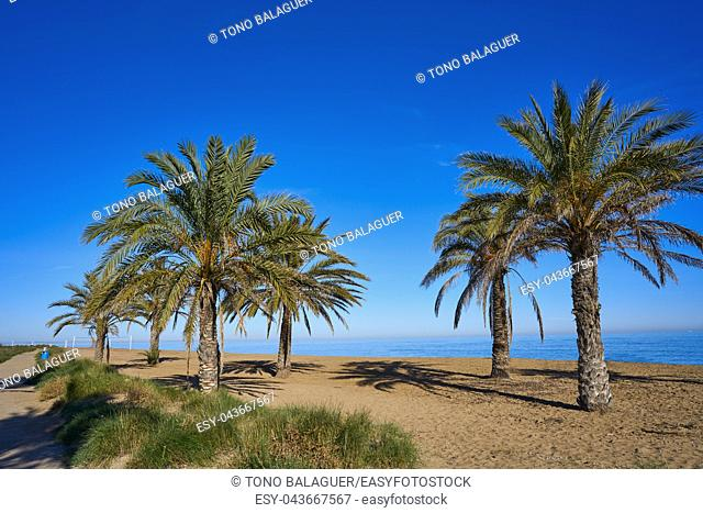 Denia las Marinas beach in Alicante palm trees at Costa Blanca of Spain