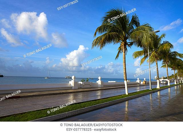 Cozumel palm trees promenade and Caribbean in Riviera Maya of Mexico