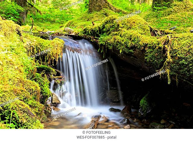SA, Washington State, Olympic National Park, View of sol duc river, Cascade