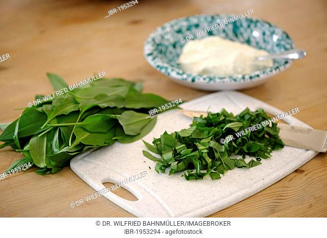 Chopped Ramsons (Allium ursinum), herbs with curd cheese