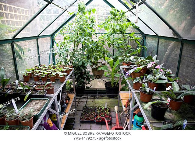Greenhouse with plants growing