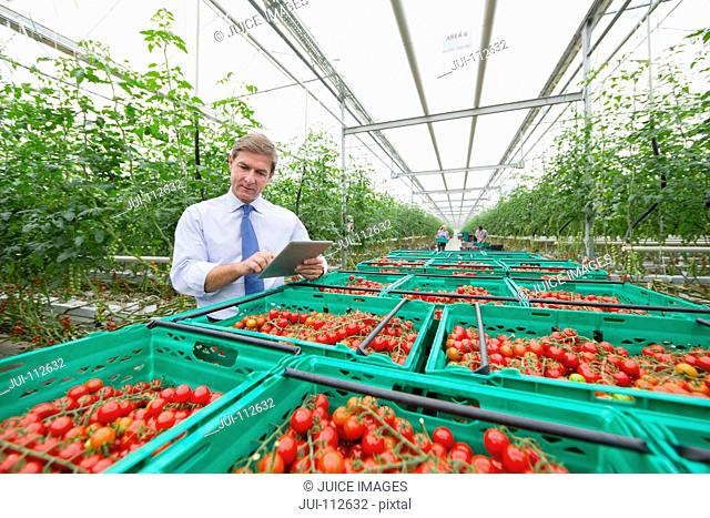 Businessman with digital tablet inspecting crates of ripe red vine tomatoes in greenhouse