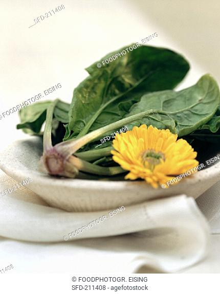Fresh spinach and a marigold on stone plate