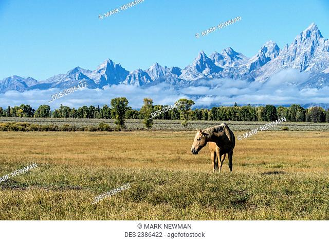 Horse in Grand Teton National Park; Wyoming, United States of America