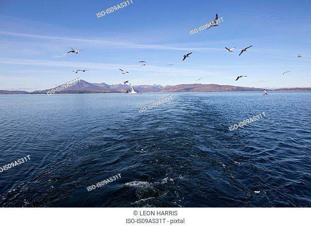 Seagulls, Isle of Skye, Scotland