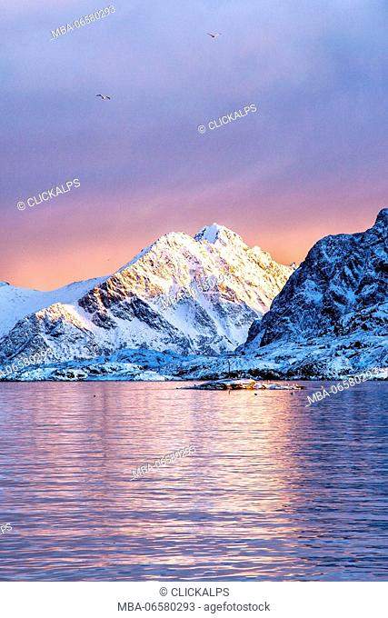 The colors of dawn light up the sea in Henningsvaer fjord, Lofoten Islands, Norway, Europe