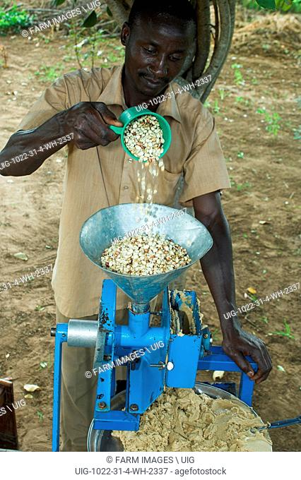 Peanuts in machine for making nut paste for culinary purposes Uganda Africa. (Photo by: Wayne Hutchinson/Farm Images/UIG)